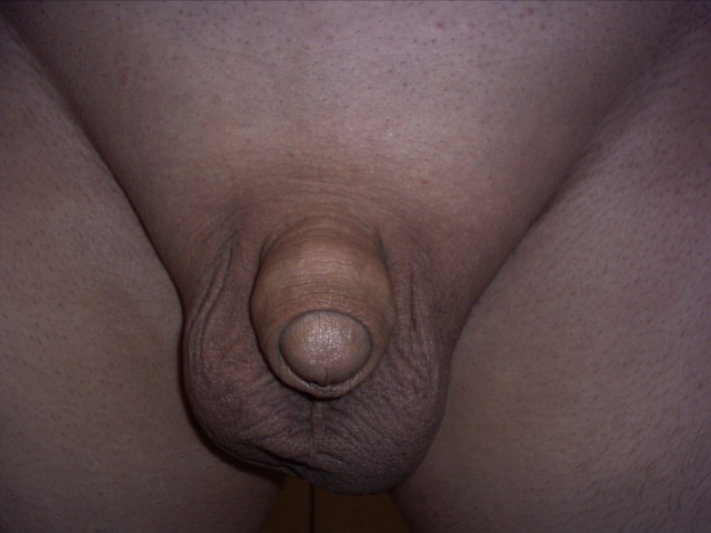 penis picture collection