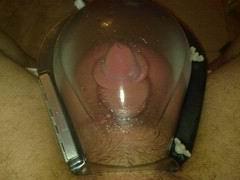 cock05.jpg